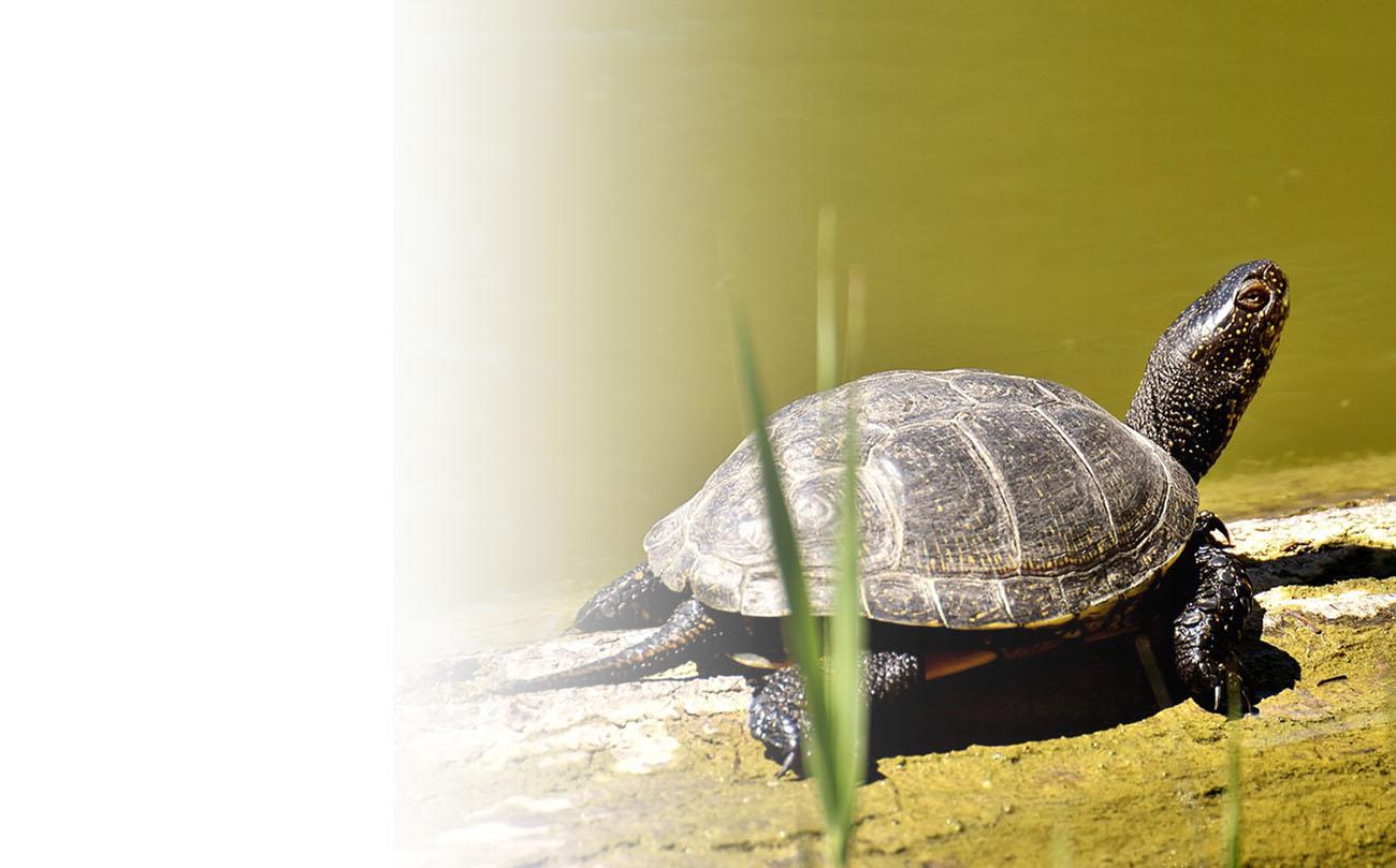Turtle GPS backpack